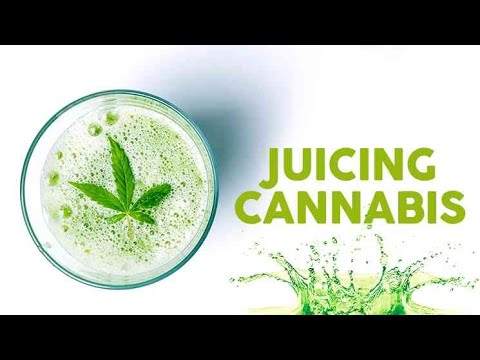 Cannabis Juicing: How To, Basics & Benefits - Cannabis Food Tips